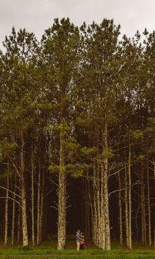 Sesión de fotos de compromiso o pre-boda en un bosque. Mary & Charlie fotografiada por Christian David Photo.