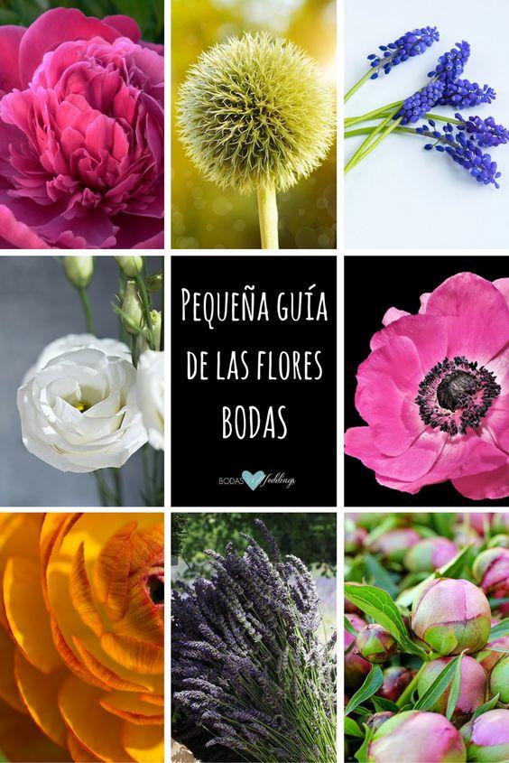 Pequeña guía de las flores, sus colores y estaciones. Peonias fucsia, cardo, muscari o jacinto, lisianthus, anémona, ranúnculo, lavanda y peonias rosadas.