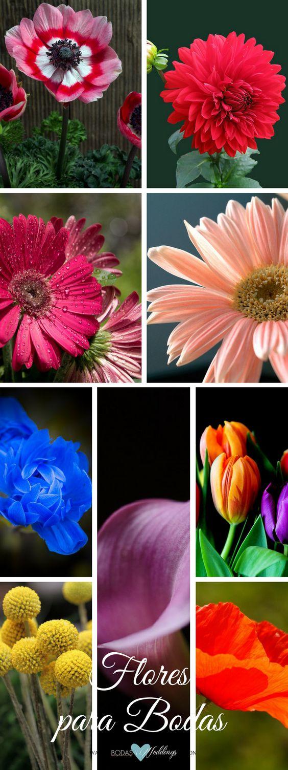 Flores para bodas. ¿Cuales son sus estaciones y colores? Anémona de jardín, dalia, margaritas gerbera fucsia y rosa, anémona azul, lirio, tulipanes, craspedia y amapola coral.