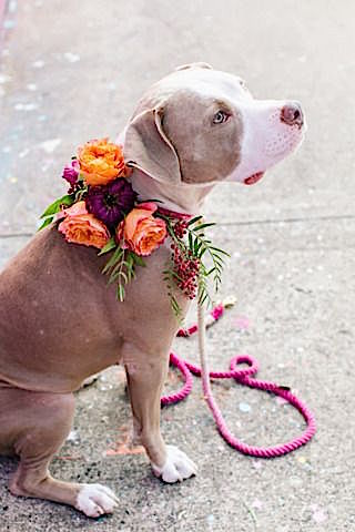 A Bohemian floral garland never looked so good! Ideas to incorporate your pet to your wedding.