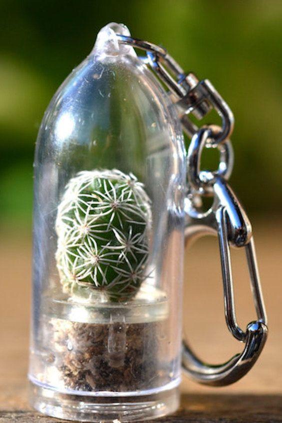 Terrarium de cactus.