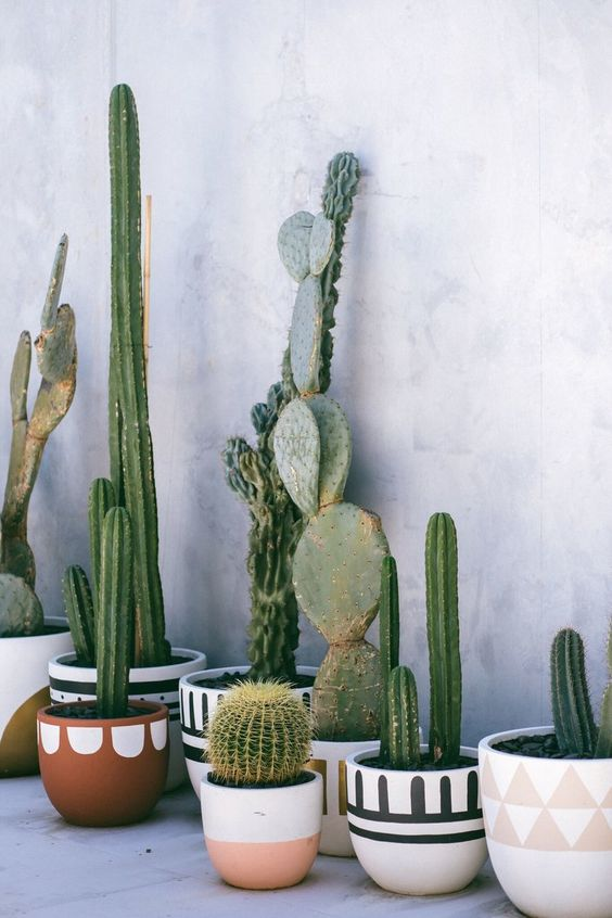 Cactus para bodas 40 ideas de decoraci n fabulosas y en for Cactus decoracion