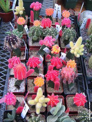 Gloriosos centros de mesa con cactus para bodas. Una idea colorida, sencilla y económica.