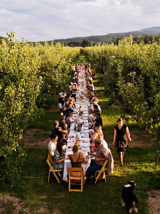 Summer or spring entertaining for a post wedding reception party. Long table garden party lunch in the vineyards.