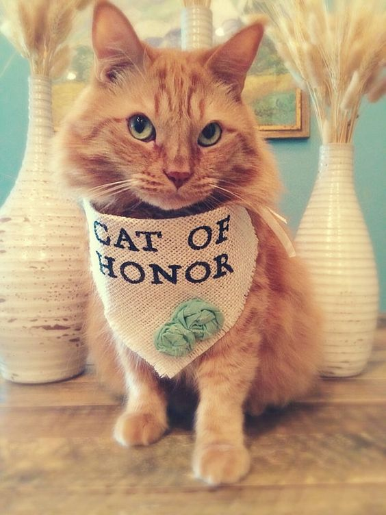 "Bandana ""Cat of Honor"" wedding collar."