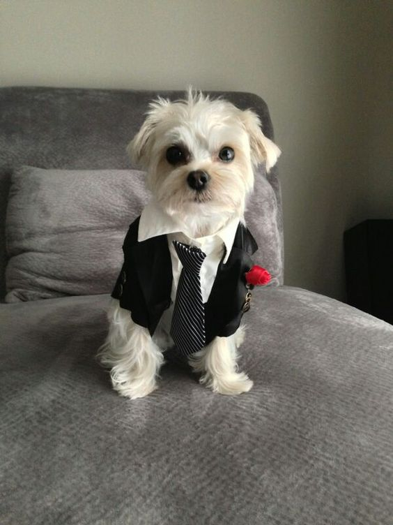 Best dog at wedding! Ultra snazzy pup-tux. Photography: Wedding Retouching.