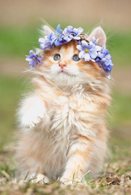 ¿Que tal luce Daisy con su coronita de flores azules?