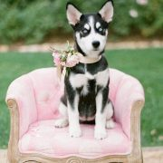 If your dog is properly trained, feel free to have her pose on a special chair. Amiright? Cutest pets in weddings.