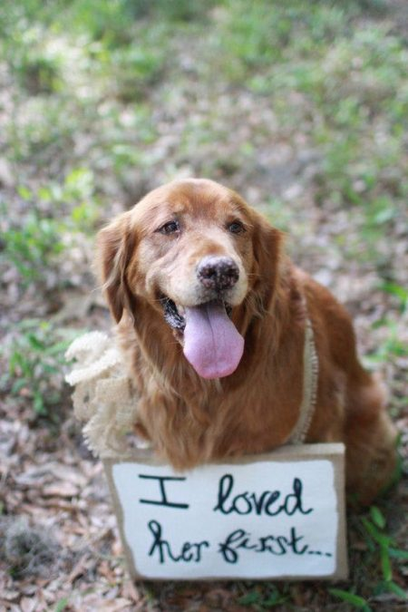 Of course he did! Cutest ways to include pets in your wedding.
