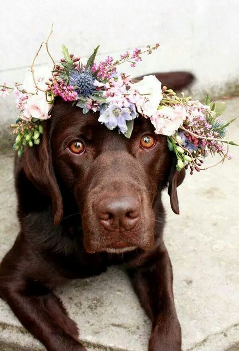 Those eyes and that face! If your dog can keep a flower crown on, try this out!