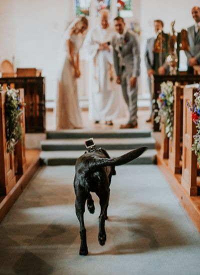 well trained furry friends will steal the show at your wedding ceremony.