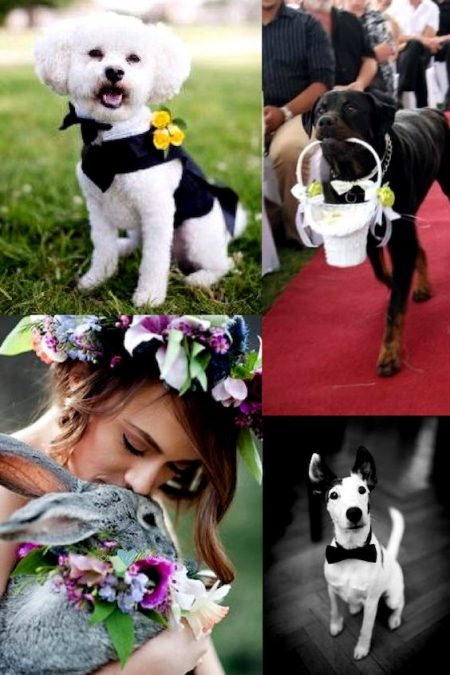 No matter who your best friend is, here's a roundup of adorable ideas to include pets in your wedding!