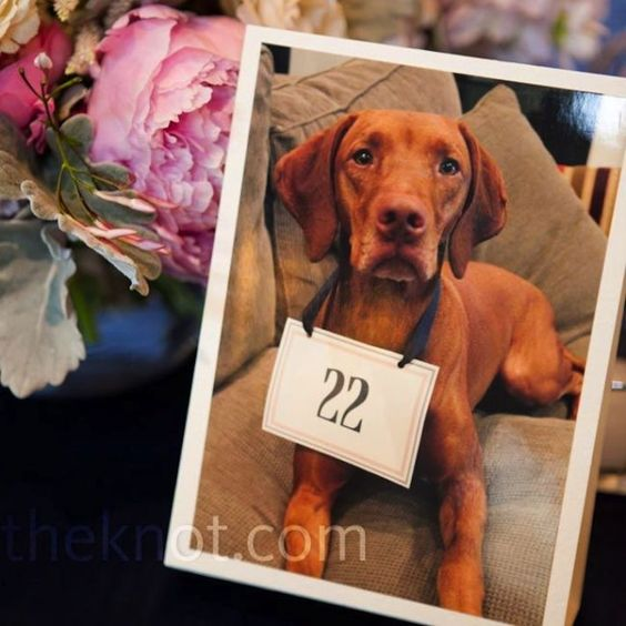 Another way to incorporate your pet in your wedding table numbers.