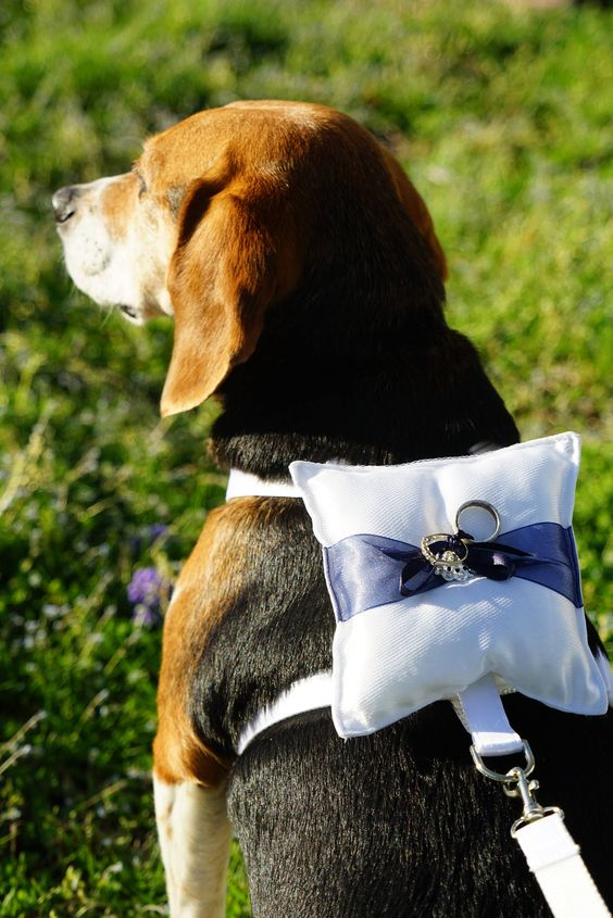 Ring bearer dog harness with pillow and matching leash. Pick the accent ribbon color. Via Etsy.