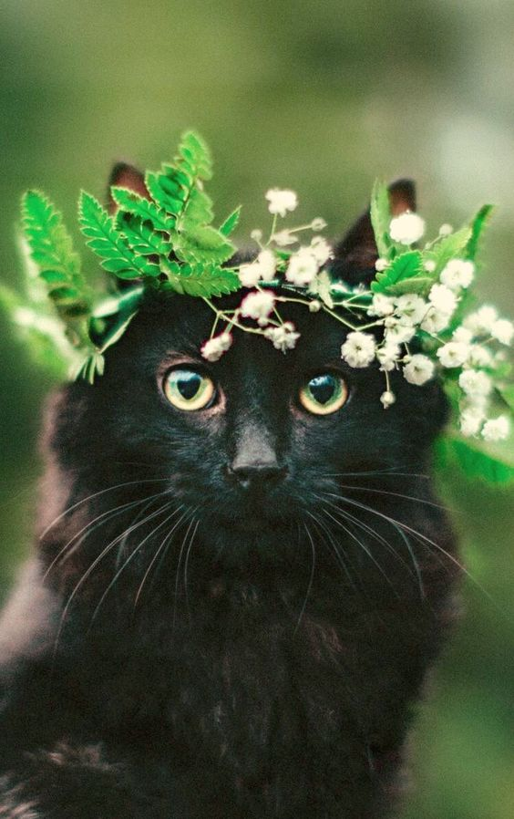 A distinctive way to incorporate pets in your wedding, a cute flower crown that matches her eyes!