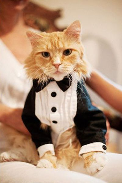 More and more pet owners are finding adorable ways to include pets at weddings. Photo: wedding-retoucing.