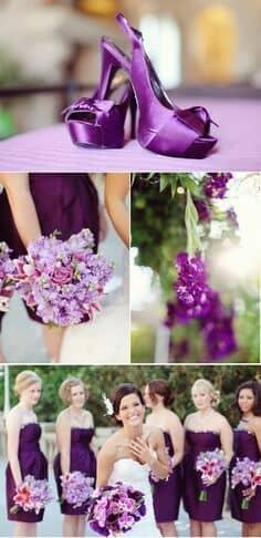 Ultra violeta y spring crocus.