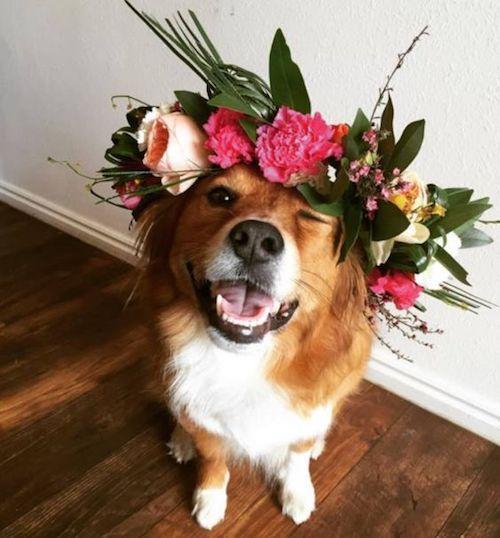 Deja que Daisy también participe del ensayo de boda.