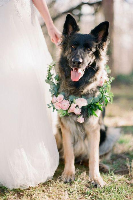 El también se acicala para el día de tu boda.