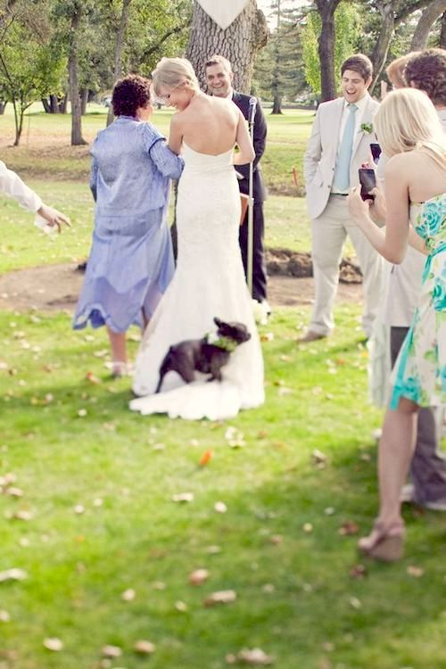 Descubre qué tener en cuenta antes de incluir mascotas en tu boda. J Squared Events.