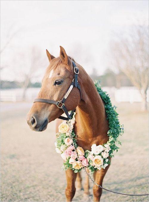 Luna con una corona de flores fabulosa y lista para la boda.