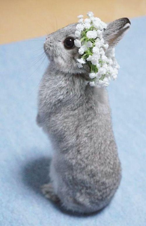 Una coronilla de flores de relleno para un conejito excepcional.