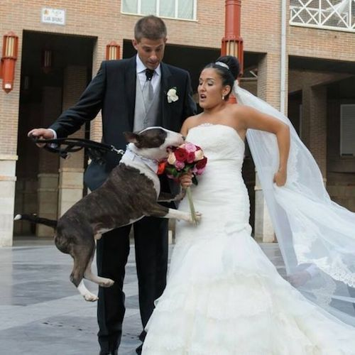 No permitas que esto suceda en tu boda. Si tu mascota es de inquietarse, asegúrate de evitar estresarla.
