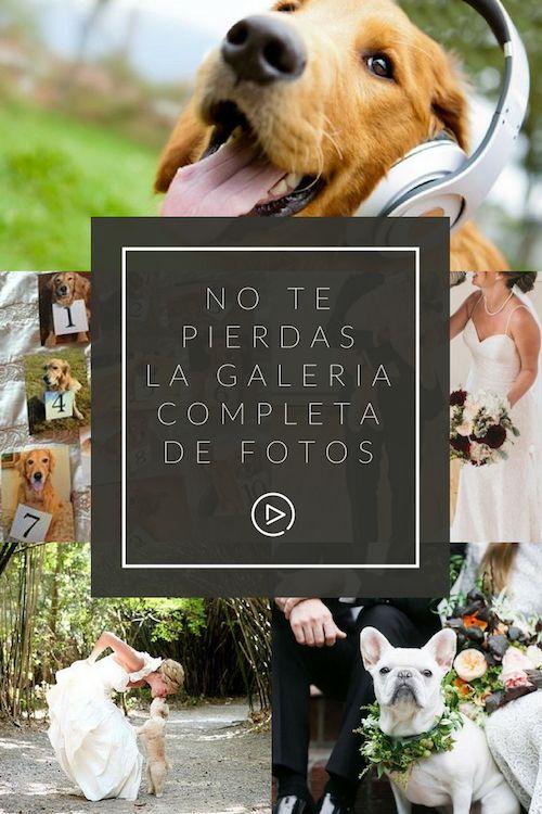 No te pierdas la galería completa de fotos de cómo incluir mascotas en tu boda.