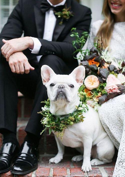 Nos encanta la idea de incluir a tu mascota en la boda. Checa estas ideas adorables para incluirlos en la tuya. Escoge unas flores del ramo de novia y otras del botonier del novio y haz una corona de flores para tu mejor amigo.