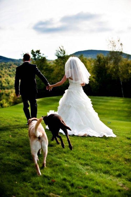 Una manera perfecta de incluir mascotas en tu boda. Fotografía de bodas con perros con vistas a las montañas Mahoosuc por Casey.