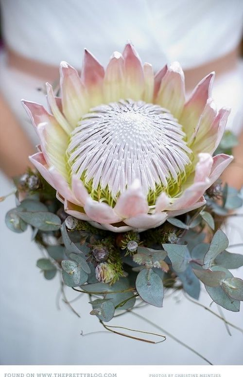 King protea and eucalyptus for a bouquet that will definitely leave an impression.