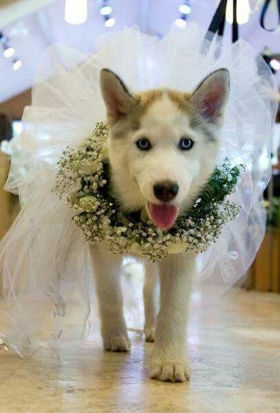 Entrena a tu mascota para que sea portadora de los anillos en tu ceremonia.