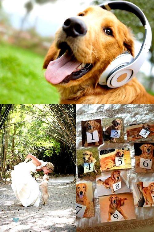 ¿Quién dejo salir a los perros? Woof! Woof! Woof! Woof! Besitos de puppy y números de mesa con temática canina.