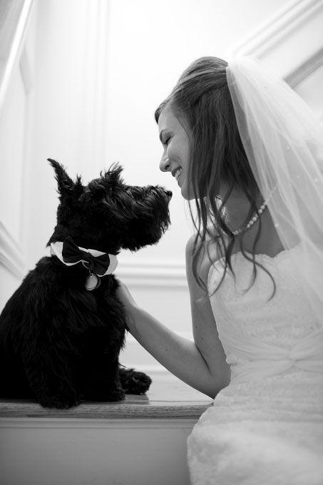 Los perritos ataviados con pequeños smokings o que llevan una corona de rosas al cuello, pueden actuar como el padrino, madrina, portador del anillo o como un invitado especial en el día de tu boda.