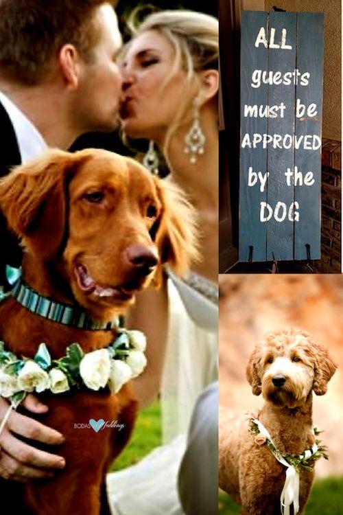 Los perros no solo son tus mejores amigos, sino también los portadores de anillos mas lindos de todos los tiempos.