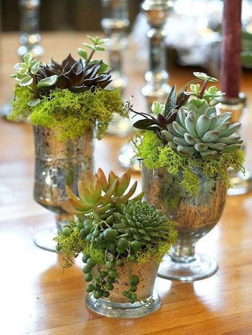 Las suculentas y el musgo o un poco de algas secas en vasos cromados.