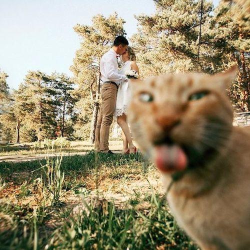 Cat wedding photobomb.